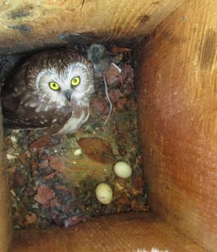 Inside nest box 9, July 2012