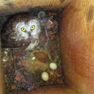 Inside nest box 9, July 2012