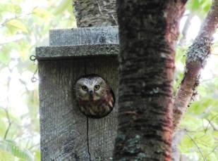 Nest box 9, July 2012