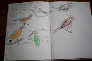 Birds we've seen