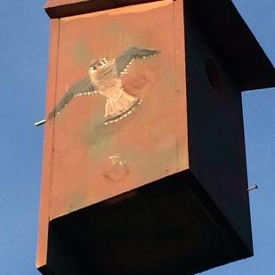 Decorated kestrel box near Mars Hill